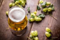 What Are Saaz Hops